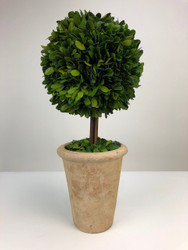 "Park Hill 16"" Preserved Boxwood Ball Topiary in Faux Stone Pot, 22.5""Dia."
