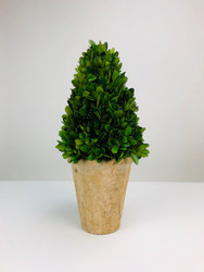 "Park Hill 13"" Preserved Boxwood Cone Topiary in Faux Stone Pot"