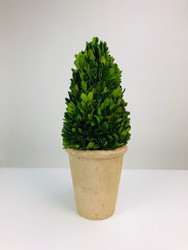 "Park Hill 15"" Preserved Boxwood Cone Topiary in Faux Stone Pot"