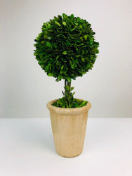 "Park Hill 16"" Preserved Boxwood Ball Topiary in Faux Stone Pot, 21""Dia."