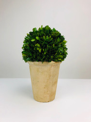 "Park Hill 13"" Preserved Boxwood Dome Topiary in Faux Stone Pot"