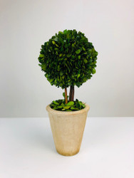 "Park Hill 11"" Preserved Boxwood Ball Topiary In Faux Stone Pot"