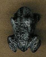 Zuni Frog Fetish Tony Mackel