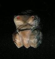 Zuni Frog Fetish Marilyn Quam F265 SOLD