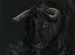 Spanish Bull artwork by Kay Johns