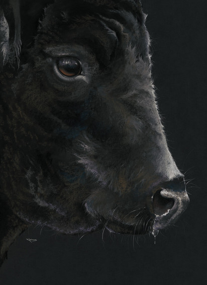 Black Angus artwork by Kay Johns