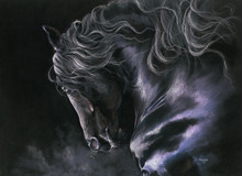Black Friesian Stallion artwork by Kay Johns