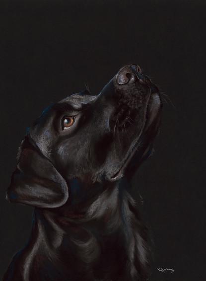 Black Labrador artwork by Kay Johns