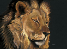 Male Lion artwork by Kay Johns