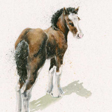 Clydesdale foal artwork by Kay Johns
