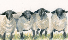 Baa Baa Q, Suffolk sheep by Kay Johns