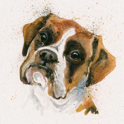 Boxer dog artwork by Kay Johns