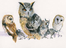 Various owls by Kay Johns