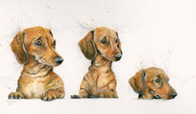 Sausage dogs by Kay Johns