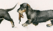 Wire haired Dachshunds  limited edition painting by Kay Johns
