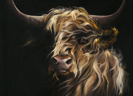 Highland cow limited edition print by Kay Johns. Paper and Canvas