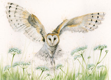 Barn owl painting by Kay Johns