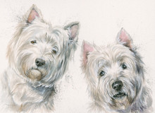 Westies by Kay Johns