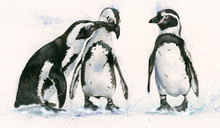 Penguin artwork by Kay Johns