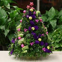 Santa's Favorite Boxwood Tree