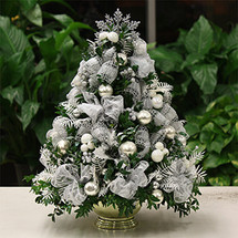 White Christmas Boxwood Tree