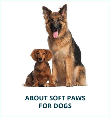 dog-about.jpg