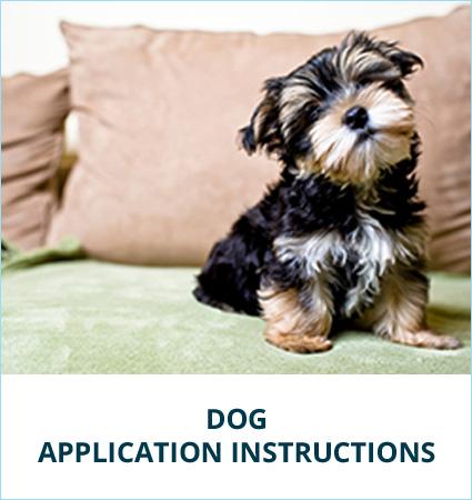 dog-app-ins.jpg