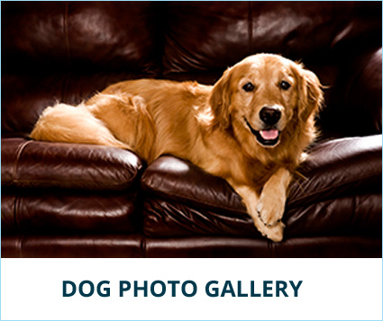 dog-gallery-banner.jpg