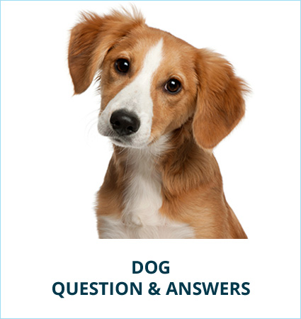 Questions Answers Soft Paws For Dogs