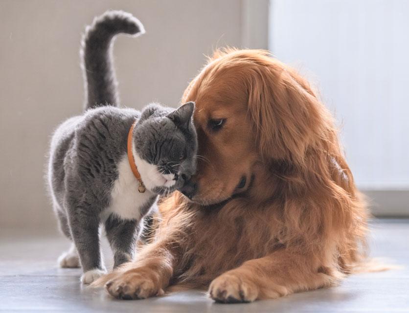 Having pets makes people happier.