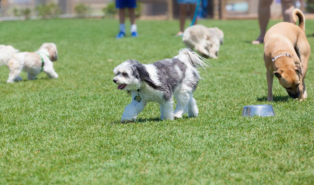 Learn the etiquette of going to a dog park.