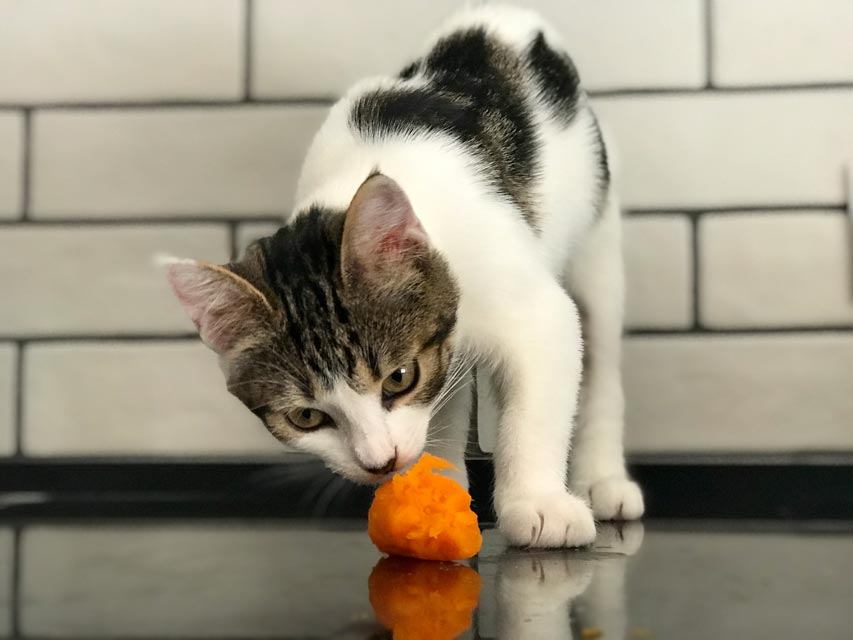 Is your cat bored with old toys?