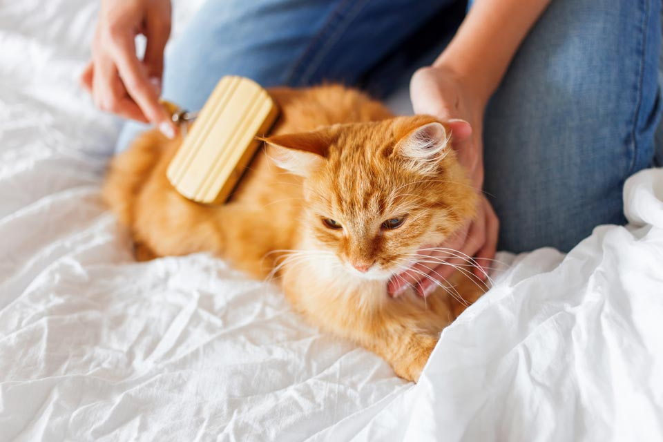 Learn what grooming cats need at home.
