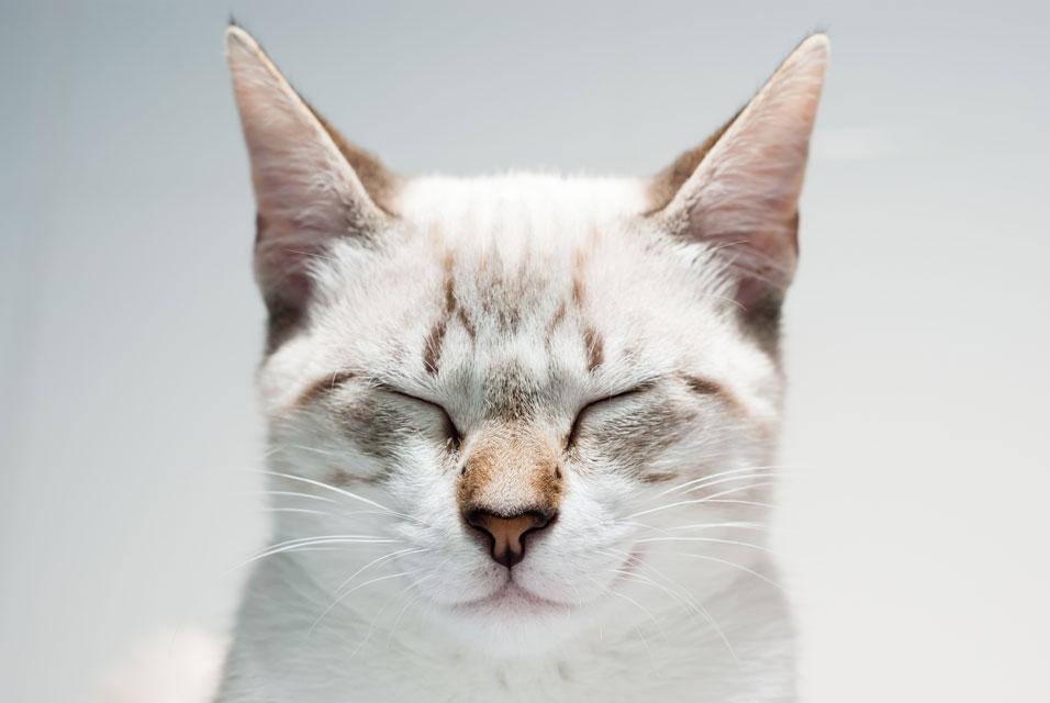 Cats and Zen