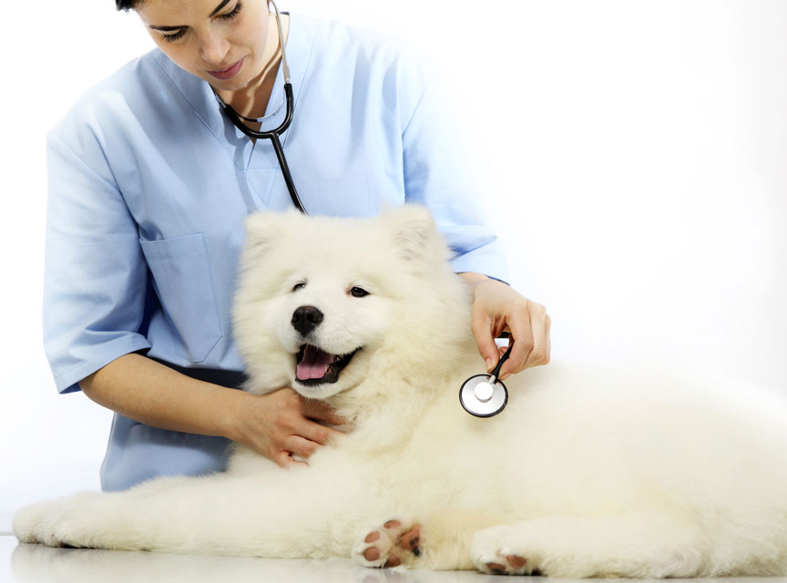 Learn what you need to know about canine heartworm.