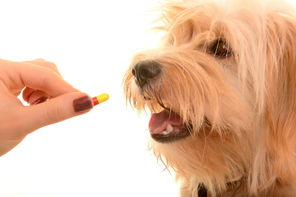 Learn how to give your pet a pill.