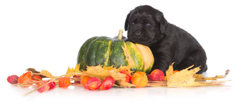 Puppy Dog October/November Combos