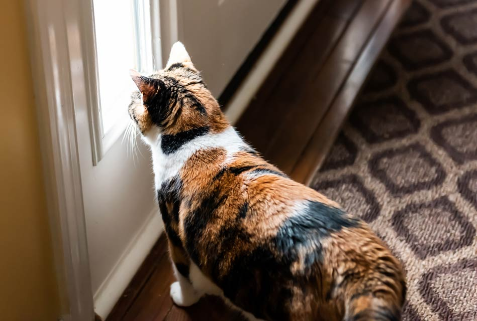 Learn about separation anxiety in cats.