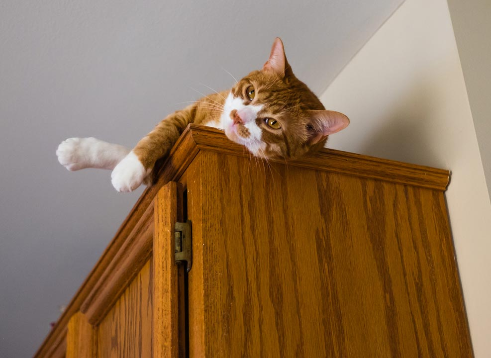Find out why some cats knock things off high places.