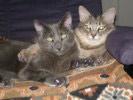 Maddie And Sam