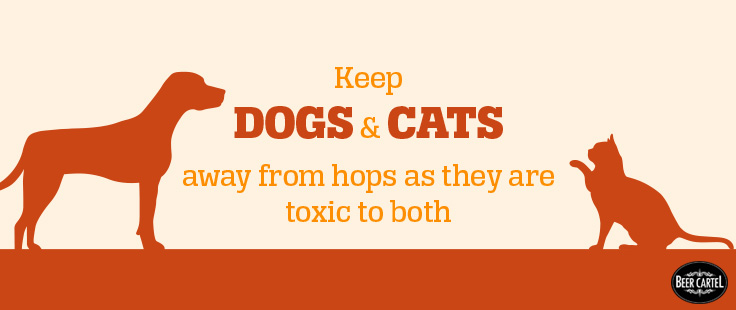 cat-dog-pet-beer-hop-danger.jpg