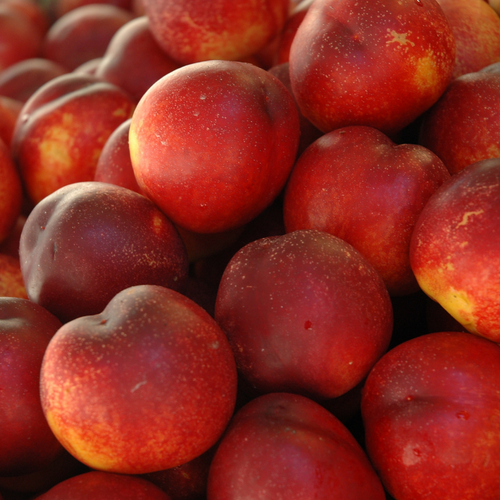 Nectarines - Holbrook Cottage Farm Stand