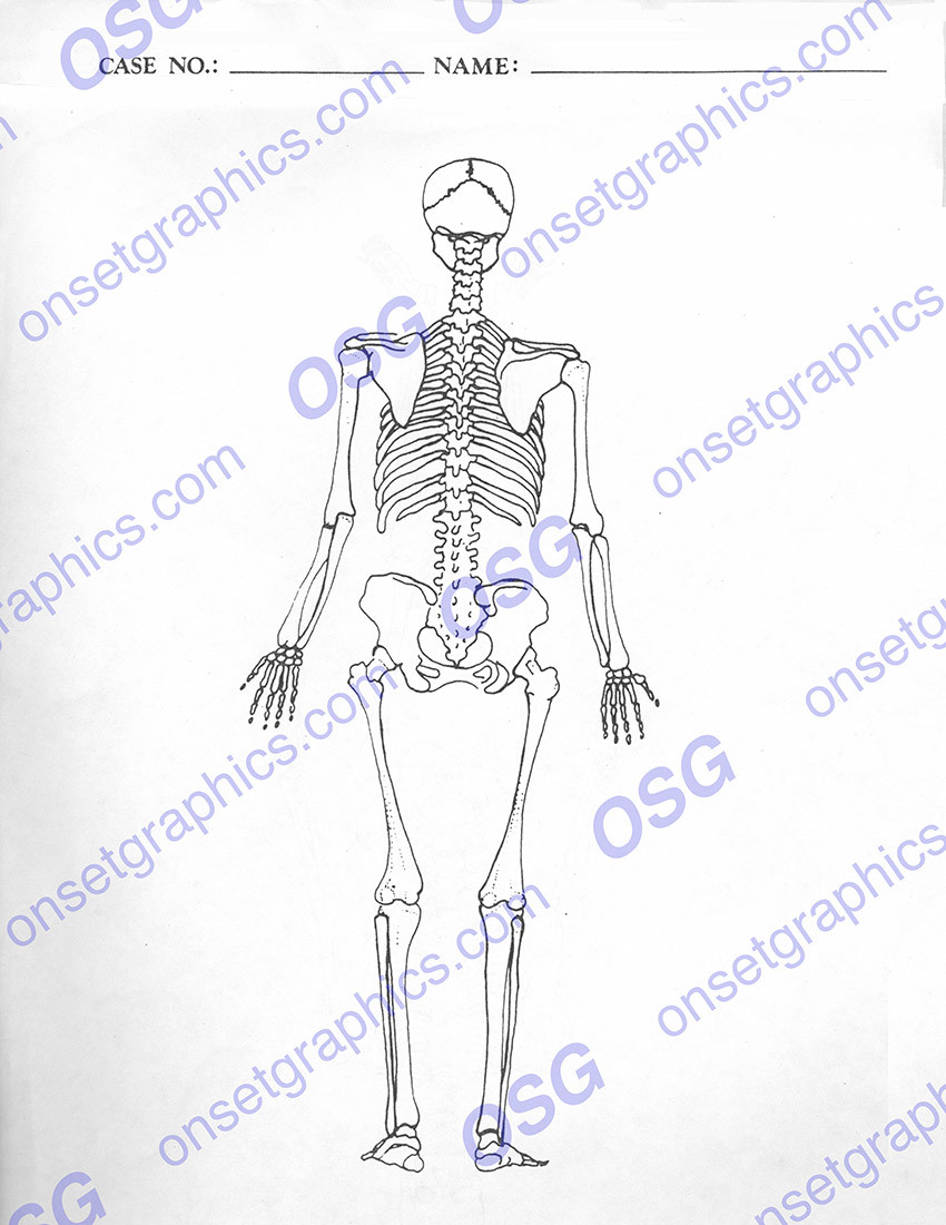 autopsy report skeleton posterior - blank - on set graphics