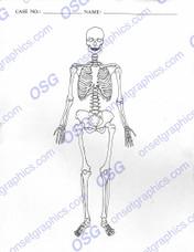 Autopsy Report Skeleton Anterior - Blank