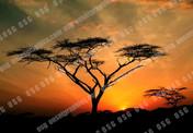 8X12 AFRICAN SUNSET