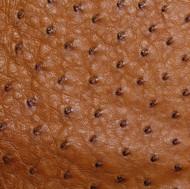 Ostrich Skin Leather - COGNAC MD - 16.6840 sq ft - Grade 1