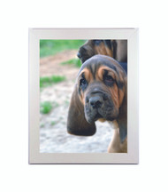 """Medium Flat White Picture Frame - wood - 1 1/4"""" wide - 16x20 artist frame - standard picture frame - empty"""