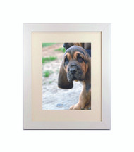 """Medium Flat White Picture Frame - wood 1  1/4"""" wide - 16x20 artist frame - standard picture frame - with matting"""