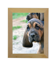 """Natural Picture Frame - raw unfinished wood - 1.5"""" wide - 8 1/2x11 artist frame - Plexi/Foam"""