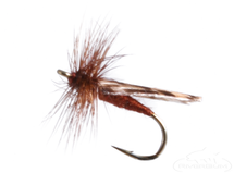 Mottled Caddis, Brown